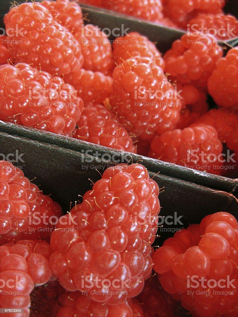 Jumbo Raspberries royalty-free stock photo