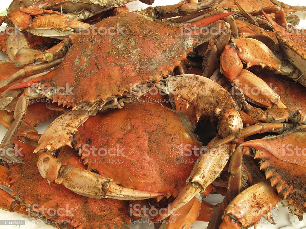 Jumbo Steamed Hard Shells stock photo