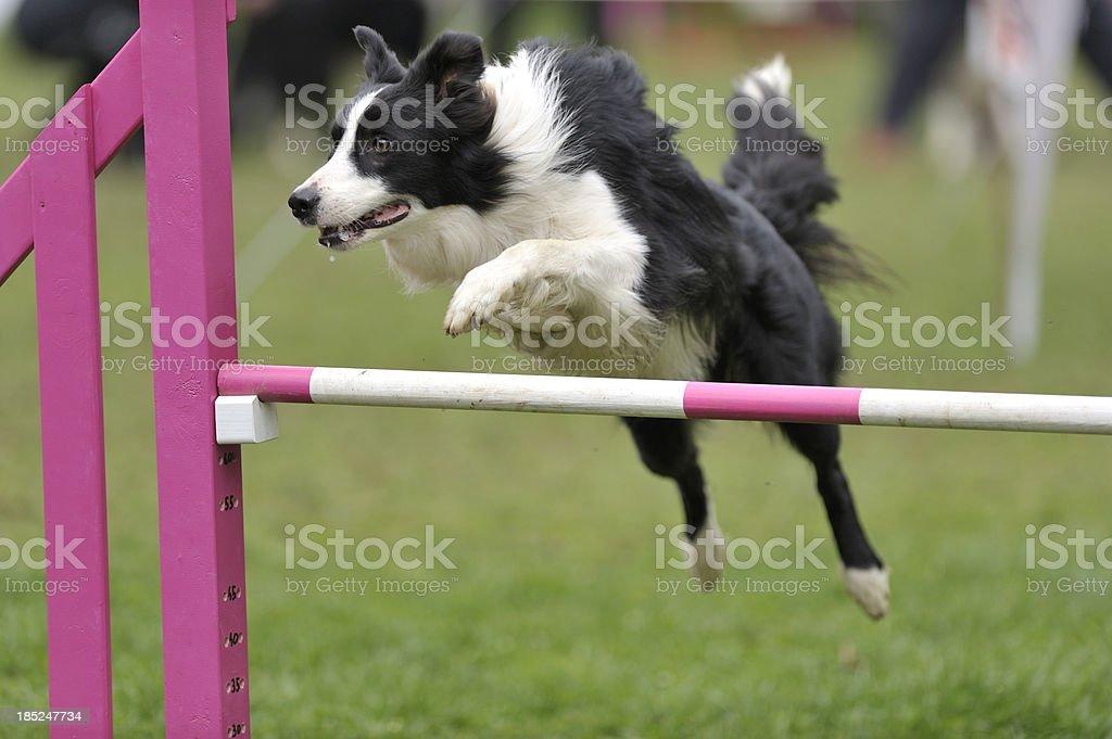 Jump - foto de stock