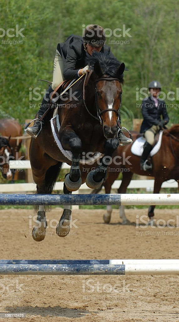 Jumper Horse royalty-free stock photo