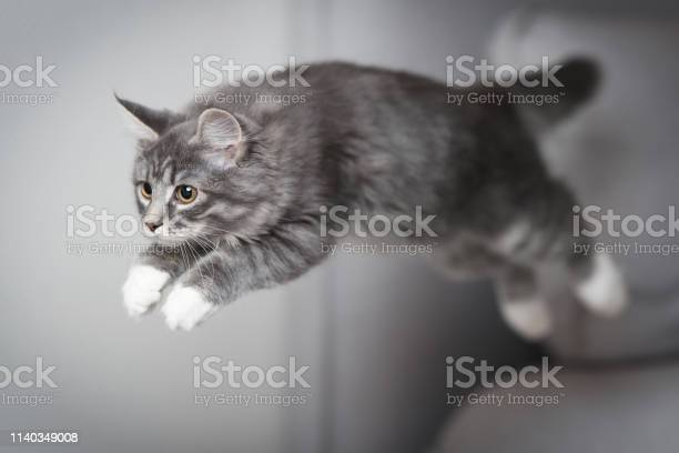 Jumping cat picture id1140349008?b=1&k=6&m=1140349008&s=612x612&h=fgycqxhlm qpqvo6uacol7519k3e6hzmuhsykzs8tsa=