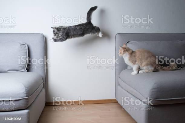 Jumping cat picture id1140349068?b=1&k=6&m=1140349068&s=612x612&h=loygpld91aap0z pz8c4klpk4tdg ynun pssa7u35g=