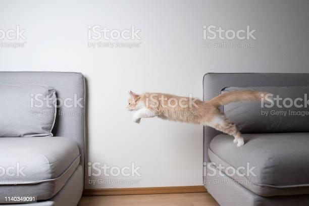 Jumping cat picture id1140349091?b=1&k=6&m=1140349091&s=612x612&h=zv0 grnzro5asq1dgho2ubwiawb5fabhbnzbws95y0m=