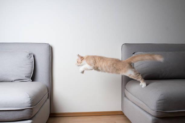 Jumping cat picture id1140349091?b=1&k=6&m=1140349091&s=612x612&w=0&h=tchrguauixkaq9qbpbmy4d6lielwrwc4zoi8mc4jml0=