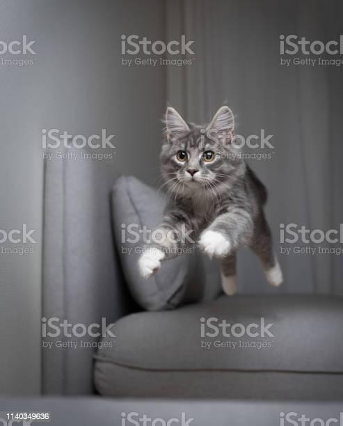 Jumping cat picture id1140349636?b=1&k=6&m=1140349636&s=612x612&h=xxqhhw5kkeyp7hoeemaq5u1de7ychqwk0udarnryt e=