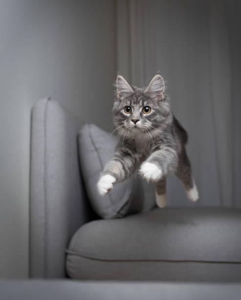 Jumping cat picture id1140349636?b=1&k=6&m=1140349636&s=612x612&w=0&h=5zz0eihu9eaeprayd2i6pzbzsy3dizsxjo58iz6zq m=