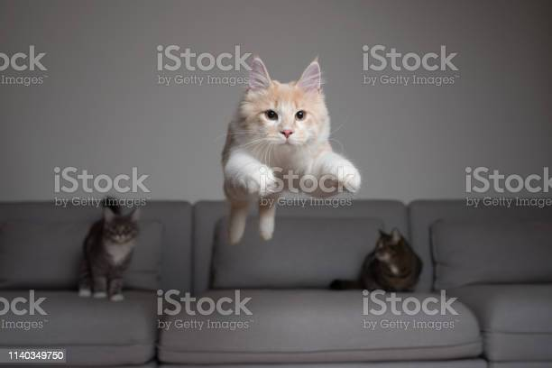 Jumping cat picture id1140349750?b=1&k=6&m=1140349750&s=612x612&h=murxlzukjdre d1cvdxlooqpq75c7ziadvgpo5nkal8=