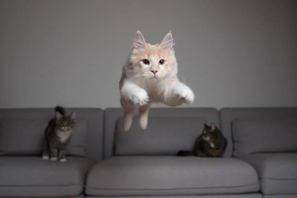 Jumping cat picture id1140349750?b=1&k=6&m=1140349750&s=612x612&w=0&h=ywz ascawjx4vii9kvioedqh5smjfe0cey5eu978dje=