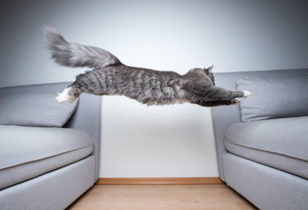 Jumping cat picture id1170788665?b=1&k=6&m=1170788665&s=612x612&w=0&h=kais4xnptjcycidcevv1rj ht68owsyhsx2igqxb4em=