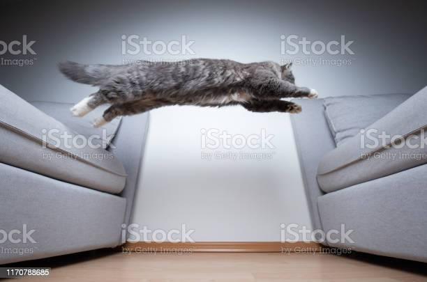 Jumping cat picture id1170788685?b=1&k=6&m=1170788685&s=612x612&h=djivcktkvig291xut4uioqblwskjofu474wxyqoxy9m=