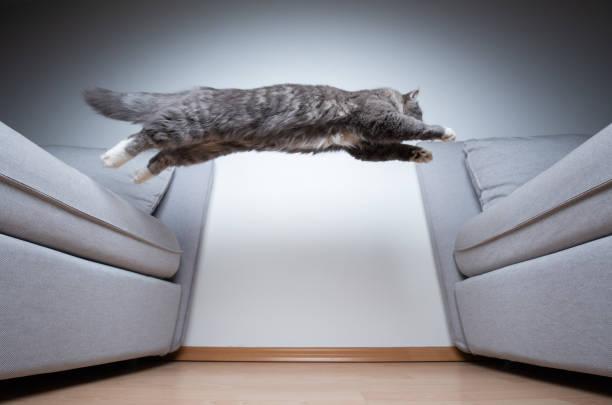 Jumping cat picture id1170788685?b=1&k=6&m=1170788685&s=612x612&w=0&h=38f28hbdzklmcc6pxyp4fp2clorx8ed tp5u21fzhlk=