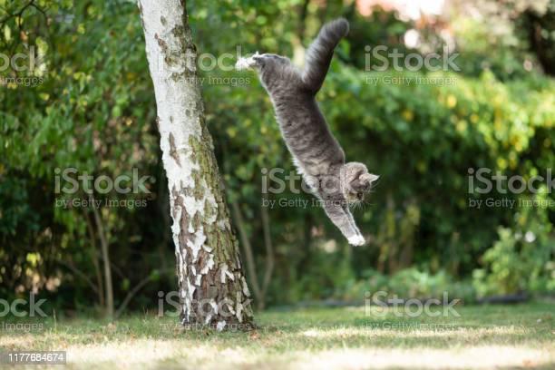 Jumping cat picture id1177684674?b=1&k=6&m=1177684674&s=612x612&h=iqwjyjzss3d8dwao51pqxhbfm7p7vrq8jwy3ic2ephg=