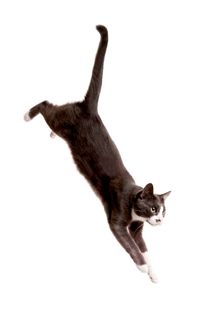 jumping cat stock photo