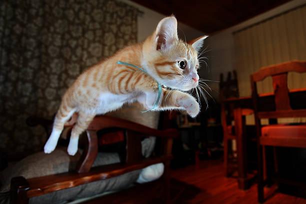 Jumping cat picture id480598247?b=1&k=6&m=480598247&s=612x612&w=0&h=khw4ye7tf5tazx7w6snjqgh66rhaead rtlsmg9l9f4=