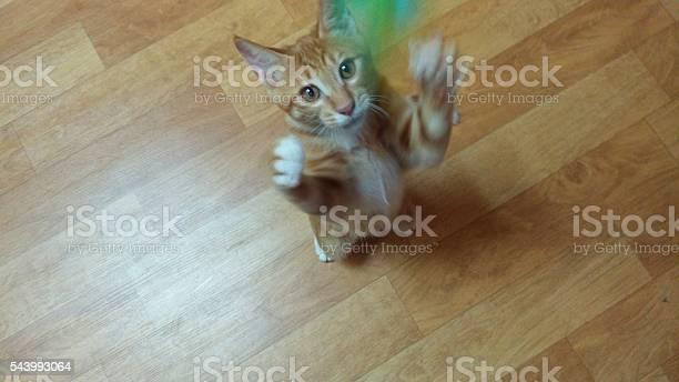 Jumping cat picture id543993064?b=1&k=6&m=543993064&s=612x612&h=oczucdhxswx0ju7dbbcjggl9kuoomknb8hcrv05nxwm=