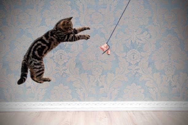 Jumping cat picture id923659758?b=1&k=6&m=923659758&s=612x612&w=0&h=egr 1toqb7mcrya3mf9jzstlu0msdhzgehl8pqzxroa=
