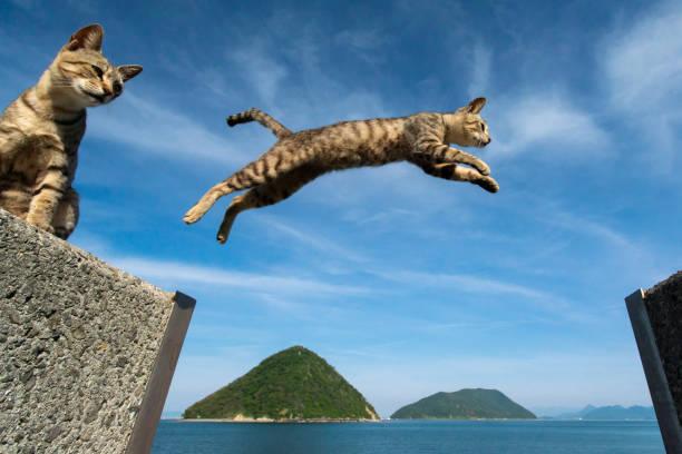 Jumping cats picture id1127075040?b=1&k=6&m=1127075040&s=612x612&w=0&h=xy04z9niqhfh5wsgrxesireua7fomaiybdysiiqrvkk=