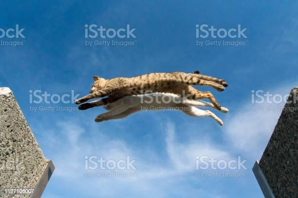 Jumping cats picture id1127105007?b=1&k=6&m=1127105007&s=612x612&h=qfw8z9 pp96x4vqargntrrwolv 4mpiw3d8dc3f0j9q=