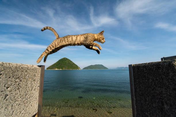 Jumping cats picture id1134391157?b=1&k=6&m=1134391157&s=612x612&w=0&h=qrihnxhytlviwq4madbhwe6qbj6i7i9ywzoj3x0bhpc=