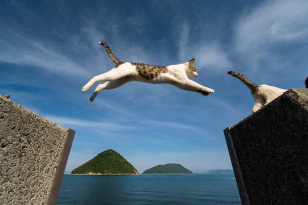 Jumping cats picture id1134391167?b=1&k=6&m=1134391167&s=612x612&w=0&h=dyefia93rpetwx1mktqldw ejvx2157jmqekv7y7zta=