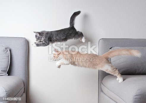 istock jumping cats 1140349010
