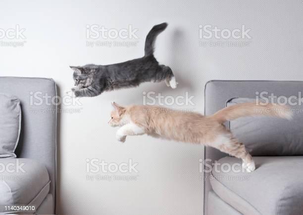 Jumping cats picture id1140349010?b=1&k=6&m=1140349010&s=612x612&h=5fd5xihlhj7wpnygbi flh0sut wxstccxppljxshjy=
