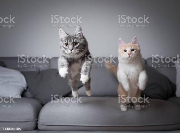 Jumping cats picture id1140349105?b=1&k=6&m=1140349105&s=612x612&h=qcxbx2ktgr64hysukulzpdbyf ryqsvftxijvgdhttg=