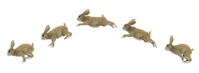 jumping cycle of a rabbit