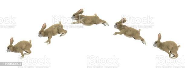 Jumping cycle of a rabbit picture id1199500904?b=1&k=6&m=1199500904&s=612x612&h=m1zxltjvjc5oifeedwy0g1nl5bkg  lu wpfajydpwu=