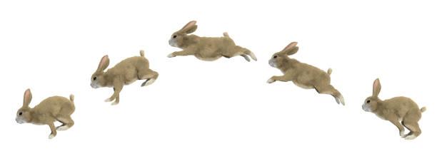 Sprungzyklus eines Kaninchens – Foto