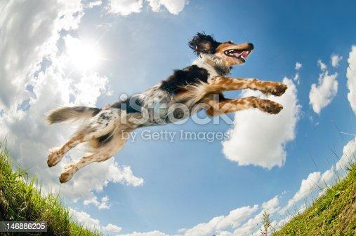 istock Jumping dog                                  (© Lobke Peers) 146886205