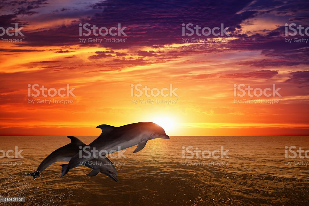 Jumping dolphins stock photo