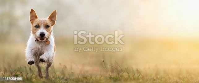 1053642922 istock photo Jumping happy obedient dog, pet training concept, web banner 1187098495