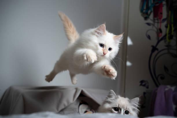 Jumping kitten picture id1194323910?b=1&k=6&m=1194323910&s=612x612&w=0&h=vxc4ssc3svegmq zgmnp1eceawxvo4vz4xs4pwilp7y=