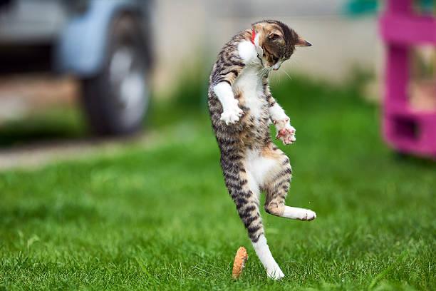 Jumping kitty in the garden picture id543657064?b=1&k=6&m=543657064&s=612x612&w=0&h= nx9kjfxglsik0xanzsh9dhjc2pekh9 9mm2k1uq39e=