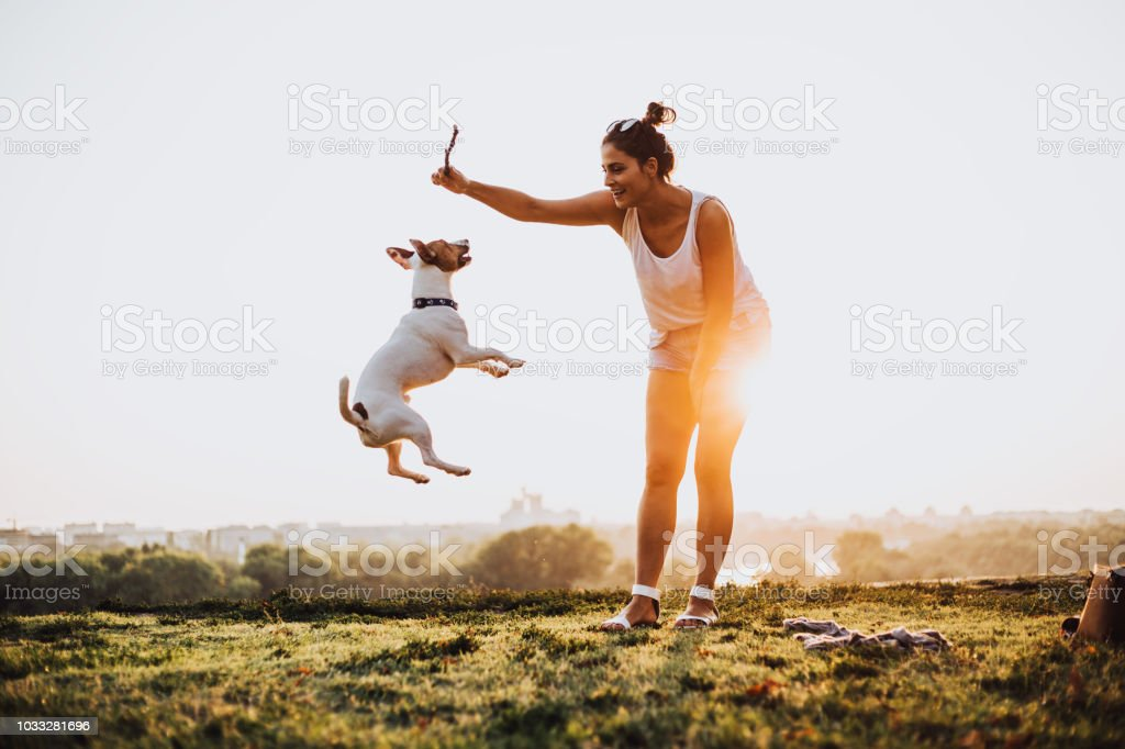 Jumping never end. The dog enjoys catching stick. stock photo