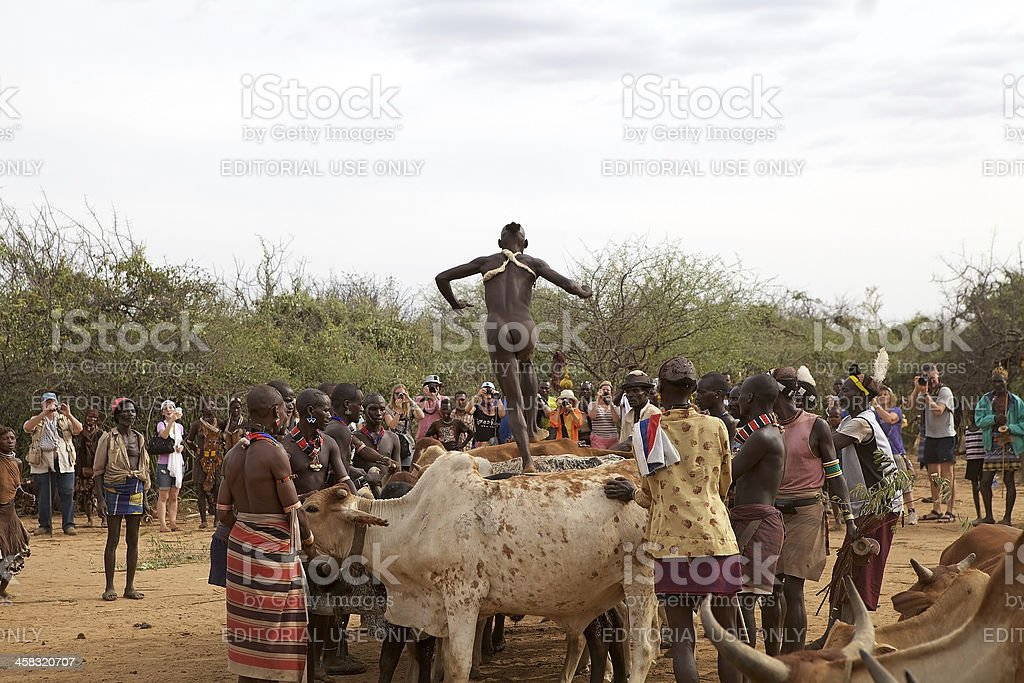 Jumping of the bull ceremony Ethiopia royalty-free stock photo
