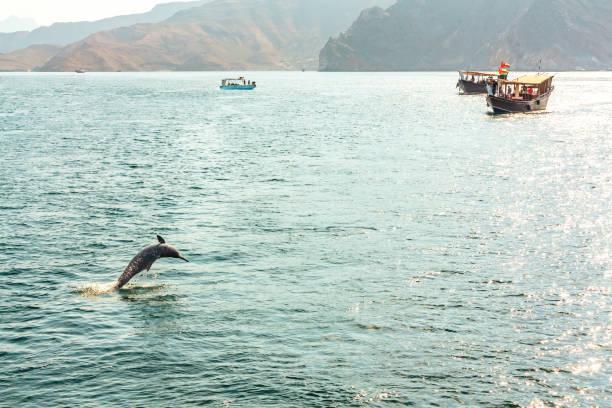 Sprung aus dem Wasser Delfin und Vergnügungsboote im Golf von Oman – Foto