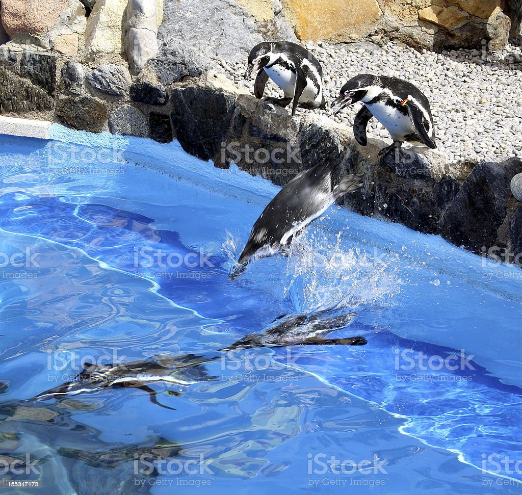 Jumping Penguins royalty-free stock photo