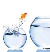 Goldfish Jumping to a Bigger Fishbowl