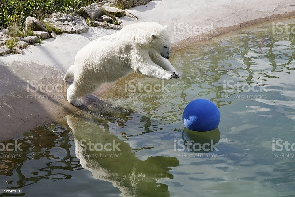 jumping polar bear royalty-free stock photo