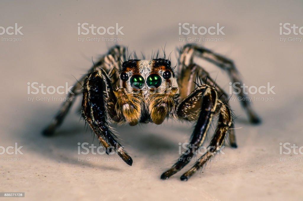 Aranha saltadora do robô - foto de acervo