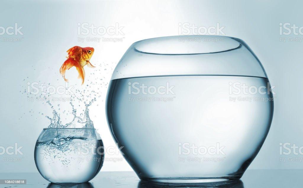 En yüksek seviyeye - Japon balığı daha büyük bir kapta - atlama aspirasyon ve başarı kavramı atlama. Bu bir 3d render örnektir - Royalty-free Aktivite Stok görsel