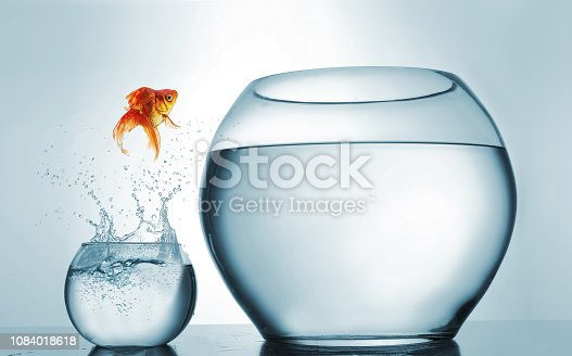 istock Jumping to the highest level - goldfish jumping in a bigger bowl - aspiration and achievement concept. This is a 3d render illustration 1084018618