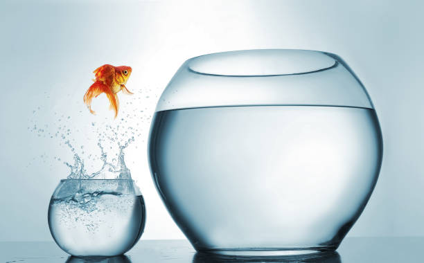 Jumping to the highest level - goldfish jumping in a bigger bowl - aspiration and achievement concept. This is a 3d render illustration Jumping to the highest level - goldfish jumping in a bigger bowl - aspiration and achievement concept. This is a 3d render illustration mid air stock pictures, royalty-free photos & images