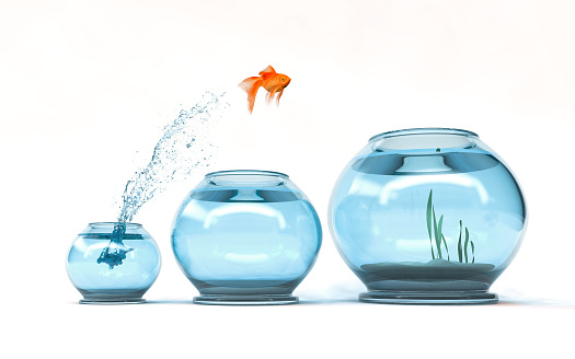 Jumping to the highest level - goldfish jumping in a bigger bowl - aspiration and achievement concept. 3d render illustartion