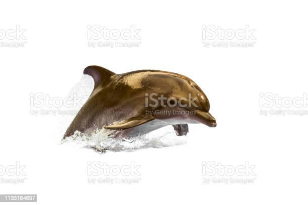 Jumping wild speedy bottlenose dolphin swimming animal at white picture id1133164697?b=1&k=6&m=1133164697&s=612x612&h=xehmkgdeok40dk9pcehn1aruyfrzuwdxgqmochxqvki=