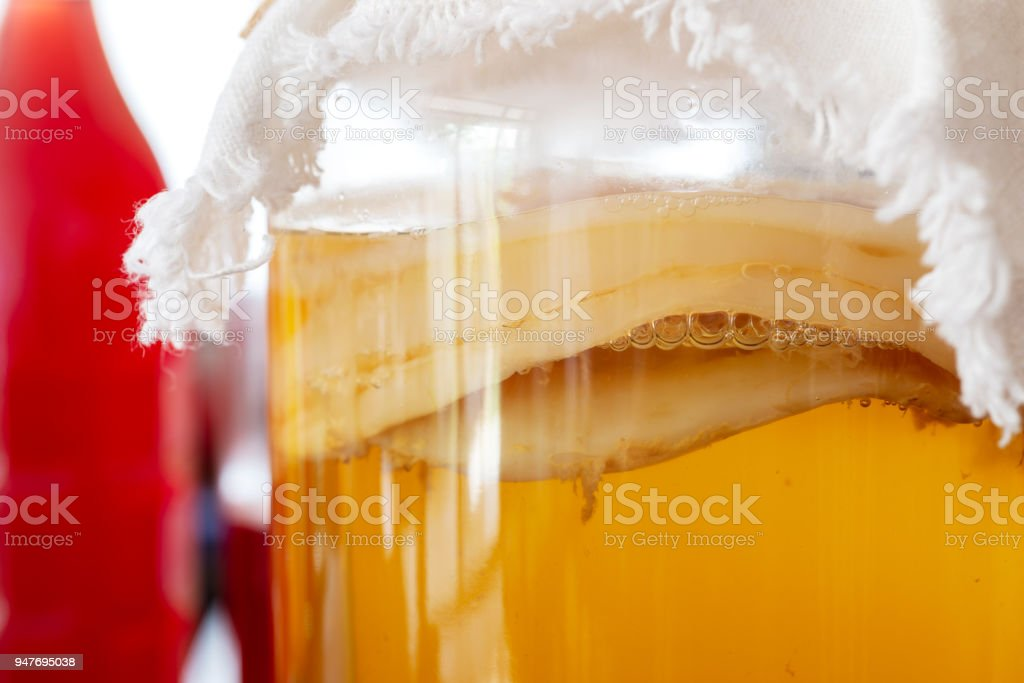 jun tea SCOBY 'symbiotic culture of bacteria and yeast' stock photo