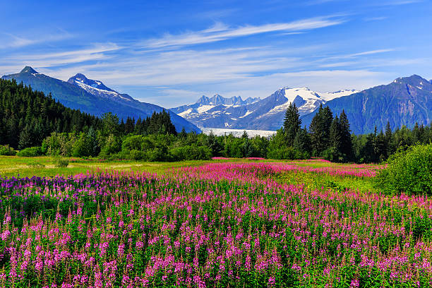 쥬노, 알래스카 - 빙하 뉴스 사진 이미지