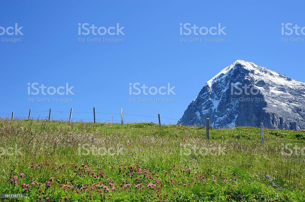Jungfrau with purple flower royalty-free stock photo